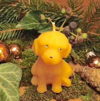 Kerze Hund Labrador