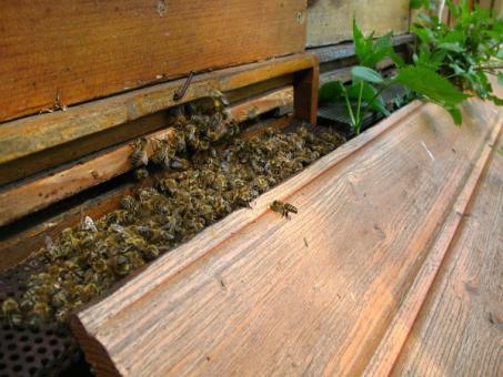 Übersicht: Pestizide und Bienen