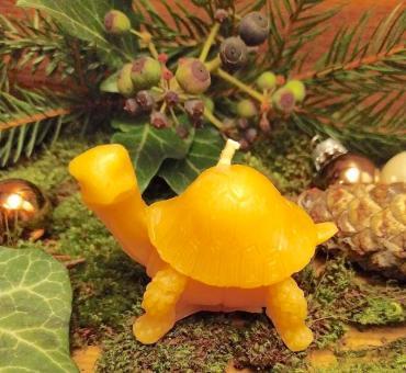 Kerze Schildkröte