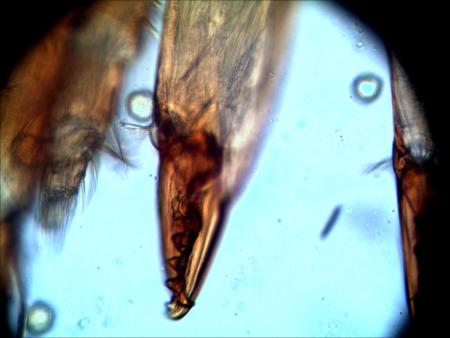 Vortrag: Das Mikrobiom des Bien